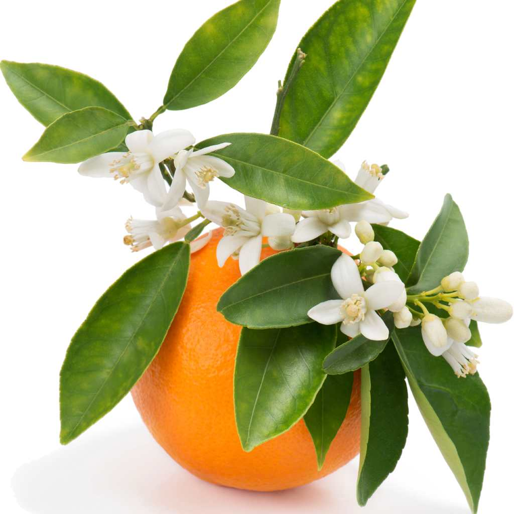 عرق بهار نارنج تقویت کننده مزاج، مغز و قلب است